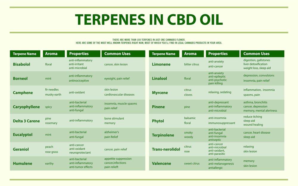 Terpenes in CBD oil horizontal infographic